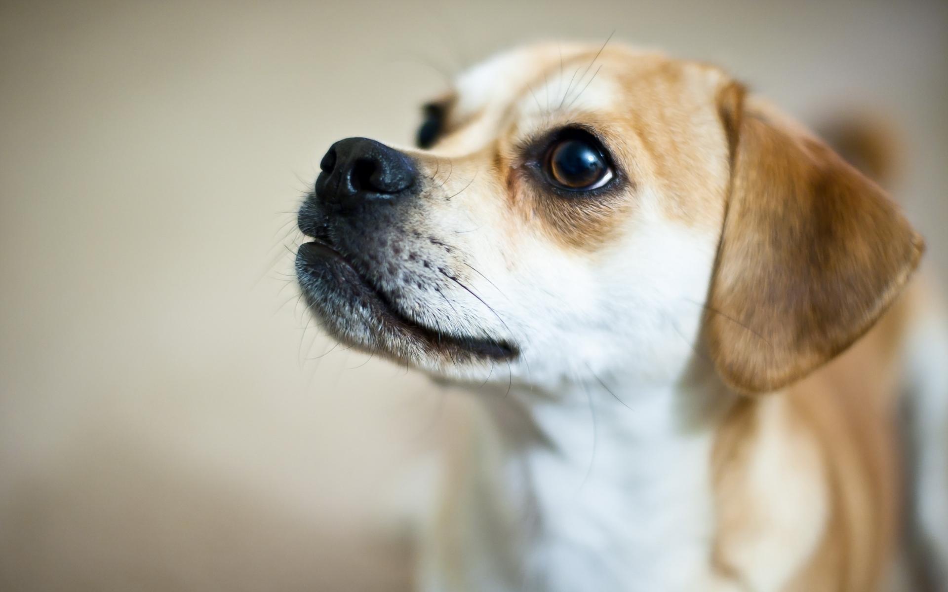 Картинки Собака, глаза, щенок, ребенок, большие глаза фото и обои на рабочий стол