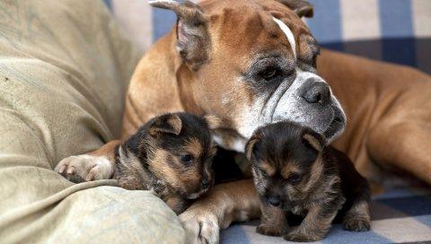 Собака, щенок, семья, забота, ложь