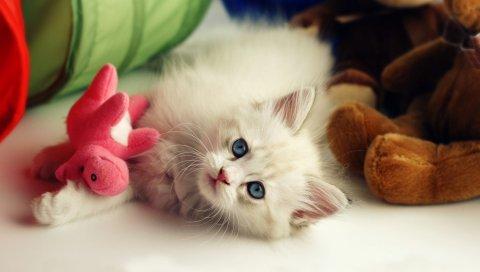 Котенок, ложь, игрушка, игривая