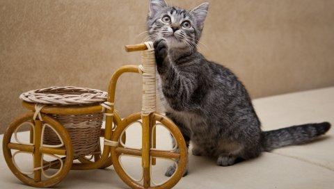 котенок, велосипед, игрушки, магазины, любопытство
