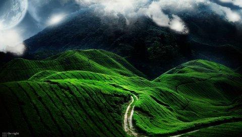Дорога, поля, полосы, зеленый, изгибы, рельеф