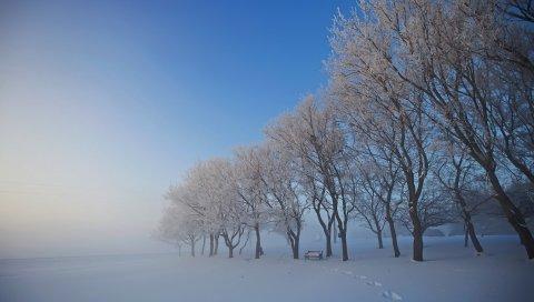 Деревья, зима, скамейка, следы, седые волосы, иней, обложка, туман