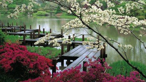 Мост, ветви, цветение, сад, веки, доски, весна