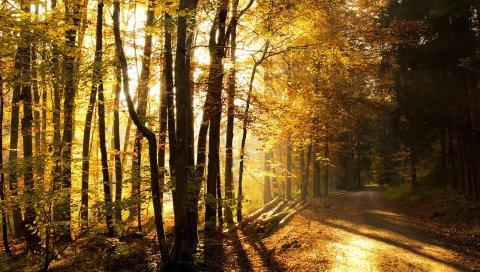 Дерево, свет, утро, бревна, земля, деревья