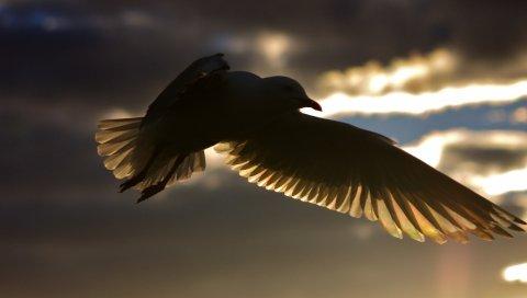 Птицы, полет, силуэт, тень, небо