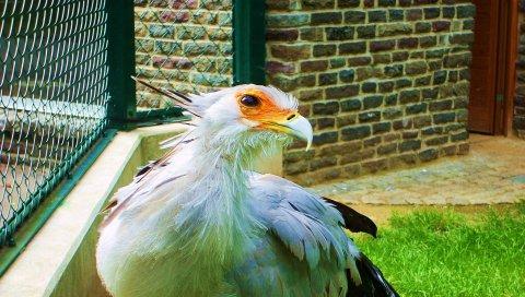 Птица, перья, цвет, свет