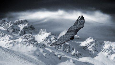 Орел, гора, небо, снег, холмы, птицы, хищники