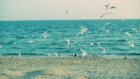Море, берег, чайки, песок, волны