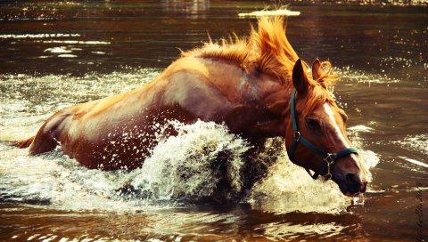 Лошадь, вода, спрей, волна