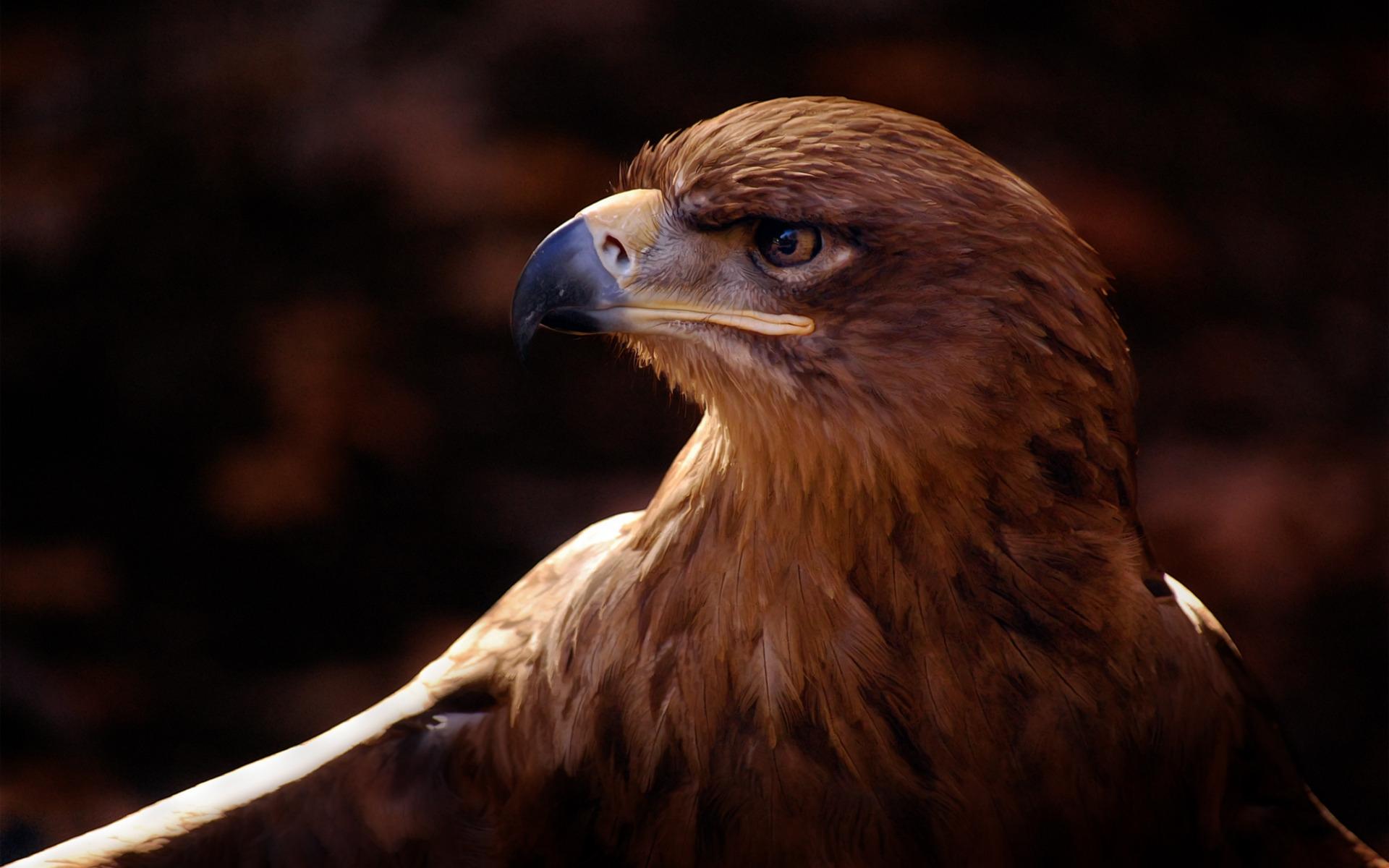 картинки на рабочий орел