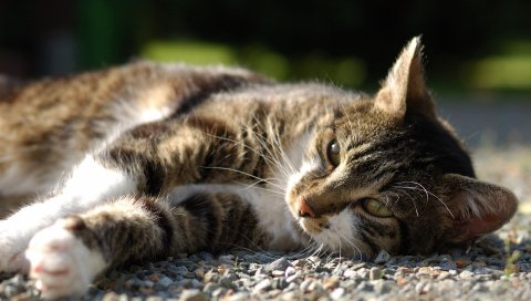 Кошка, лежа, скалы, взгляд, часы