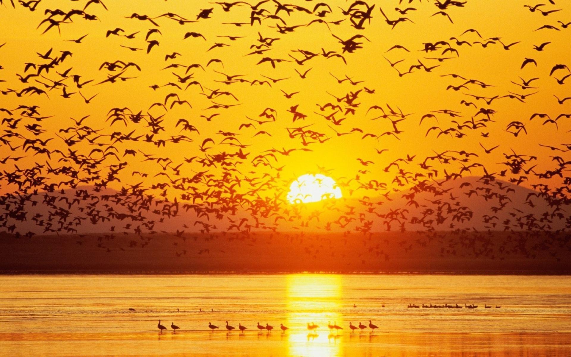 Картинки Птицы, закат, небо, море, горы фото и обои на рабочий стол