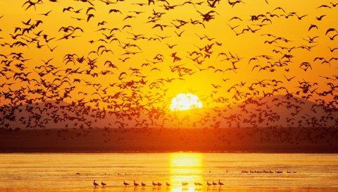 Птицы, закат, небо, море, горы