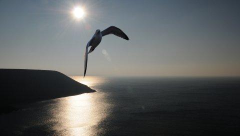 чайки, море, небо, силуэт, тень, летать, качели