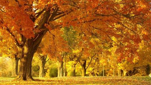 Дерево, деревья, очень, октябрь, тишина, проспект, цвета