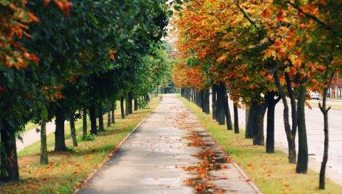 Деревья, парк, листья, осень, путь, листва, мокрый