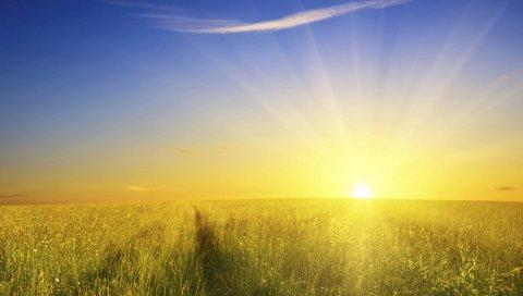 Поле, солнце, свет, следы, дорога, пробуждение