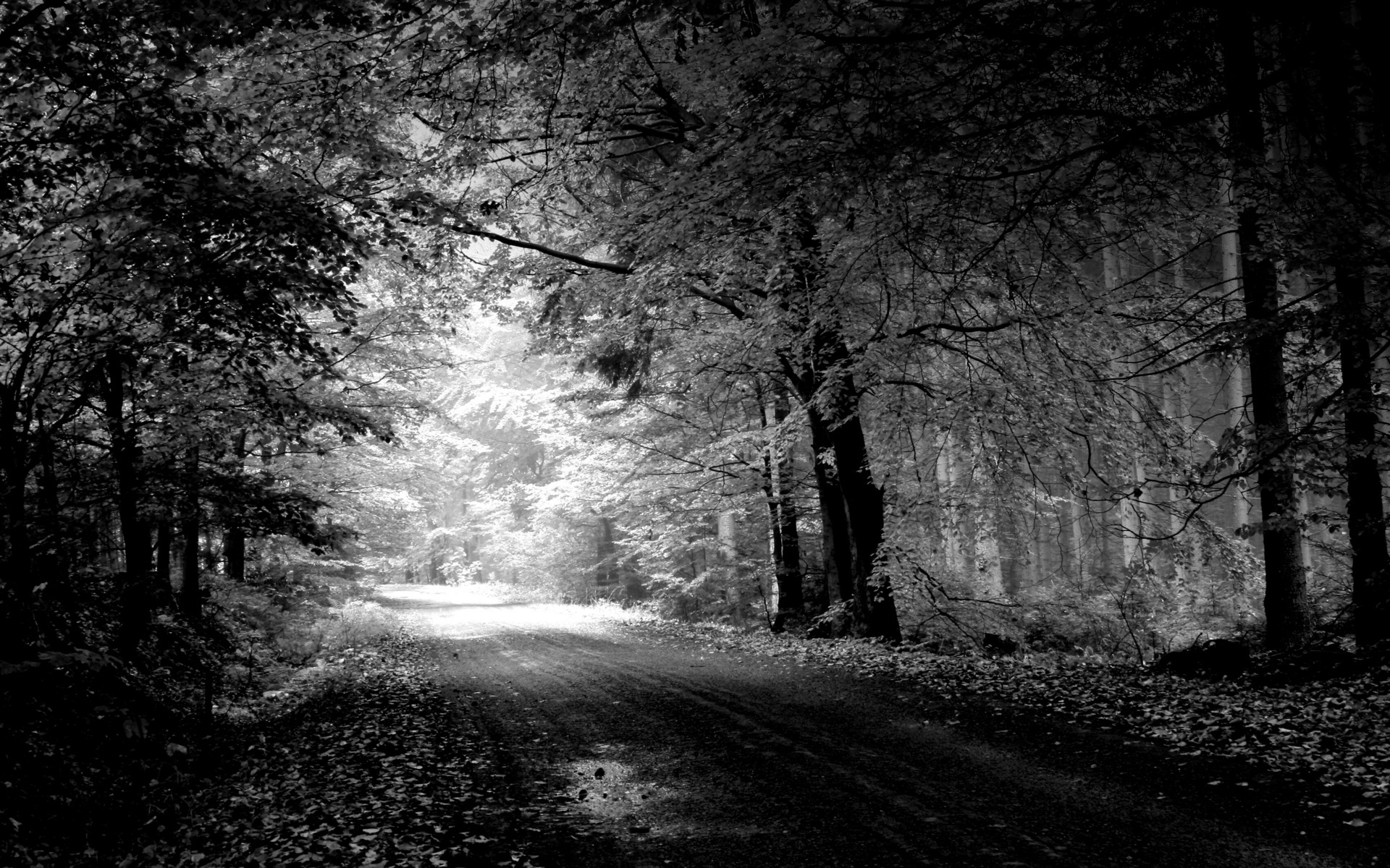 Картинки Дорога, осень, черно-белый, деревья, бассейн фото и обои на рабочий стол