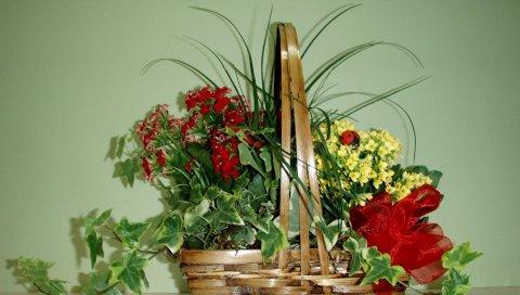 Цветы, корзина, лук, зеленый, божья коровка
