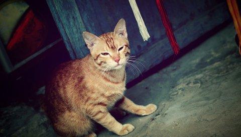 Кошка, призрак, полосатый, мнение