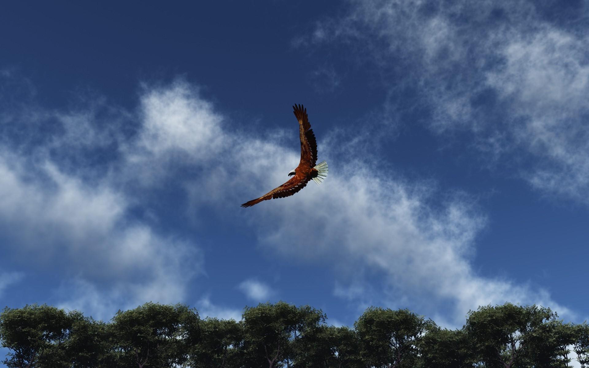 свободная птица в полете картинки