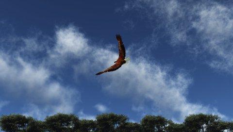 Орел, небо, облака, полет, крылья, лоскут