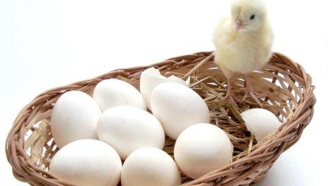 Цыпленок, яйца, корзина