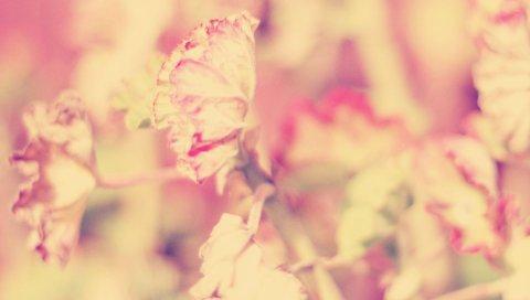 Цветок, трава, свет, яркий