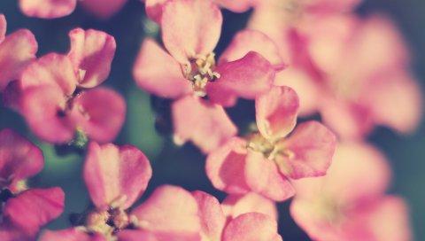 Цветы, лепестки, свет, фон
