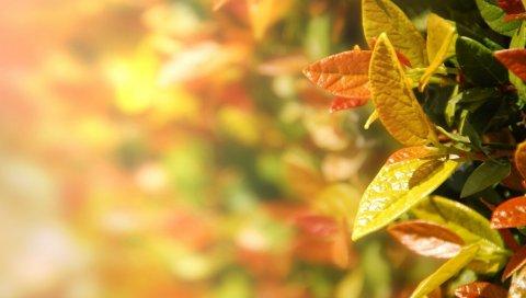 Листья, осень, красочные