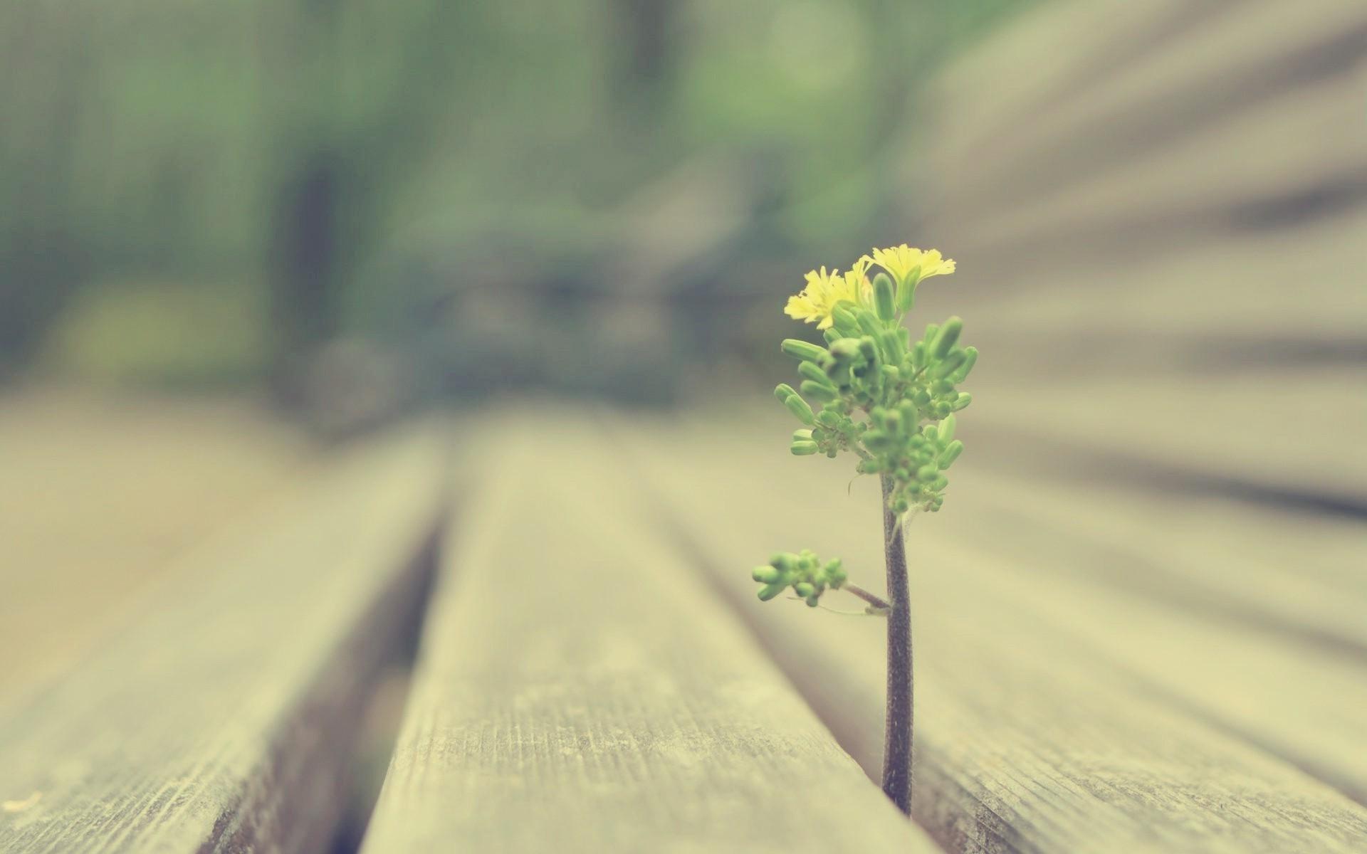 Картинки Росток, трава, дерево, растение фото и обои на рабочий стол