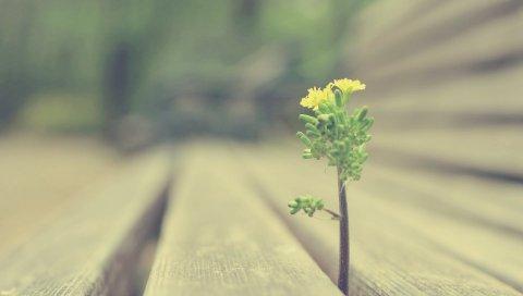 Росток, трава, дерево, растение