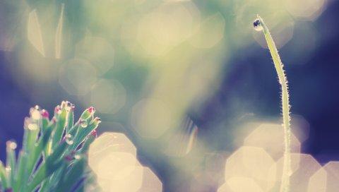 Трава, блики, свет, фон