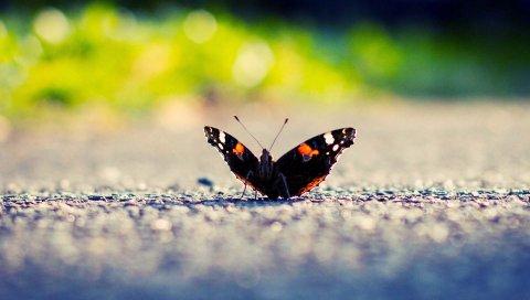 Бабочка, крылья, поверхность, свет, насекомое