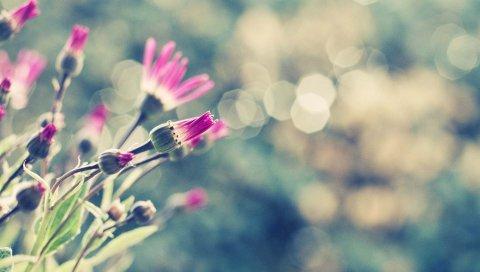 Цветы, трава, луг, блики
