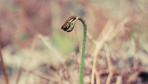 Росток, трава, сухие, патчи