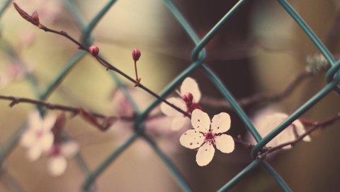 Цветы, цветы, ветка, трава