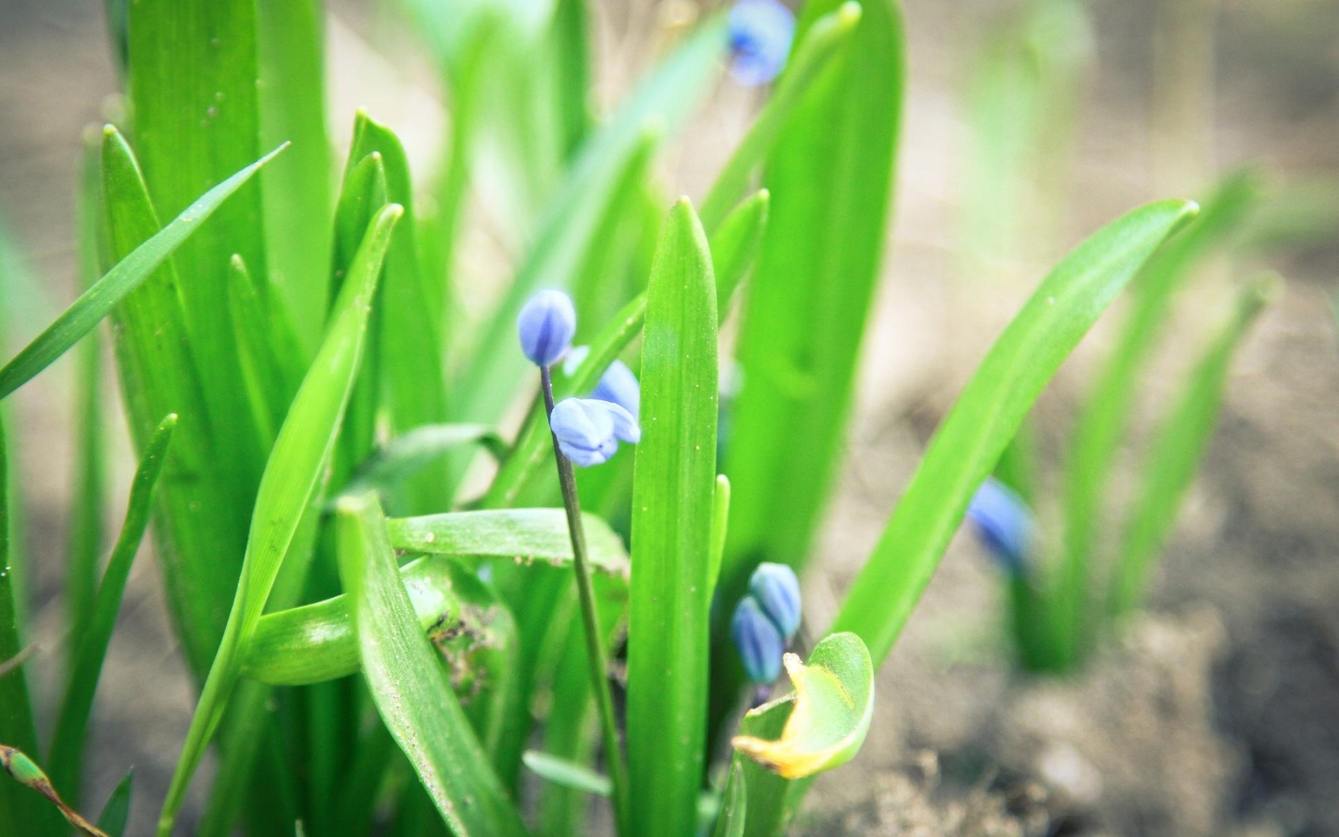 Картинки Цветы, трава, весна фото и обои на рабочий стол