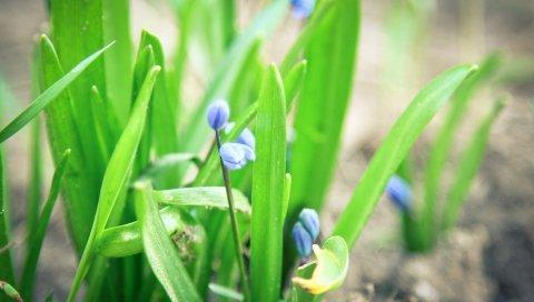 Цветы, трава, весна