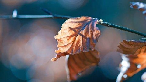 Листья, ветки, сухие, осенние, блики