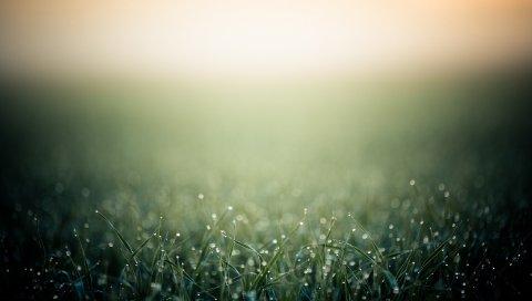 Трава, капли
