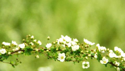 Цветы, ветки, растения, фон