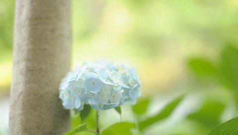 Цветок, трава,