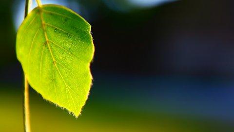 Листья, растения, форма, свет, фон