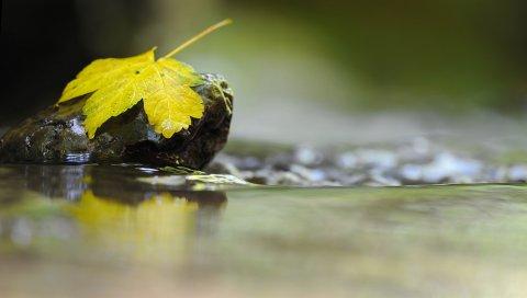 Лист, камень, вода, жидкость