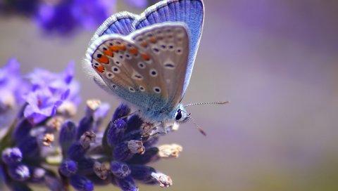 Бабочка, цветок, полет, пятно, свет
