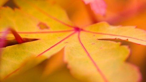 Лист, клен, осень, линии