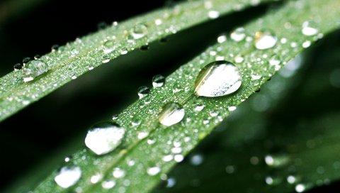 Трава, капли, поверхность, светло-зеленый