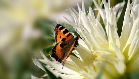 Цветок, бабочка, полет, крылья, узоры
