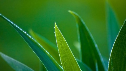 Трава, листья, форма, край